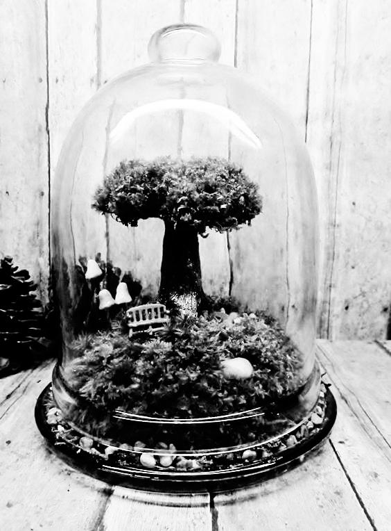 Terrarium, ovvero coltivare il proprio giardino