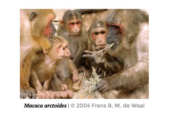 Quando un macaco ha fame