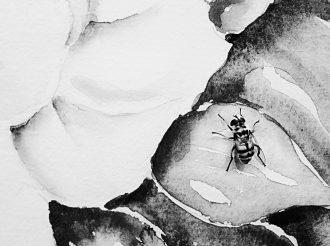 Ape su carta acquerello di vera palomo foto di anna laviosa-2011-anna-lav