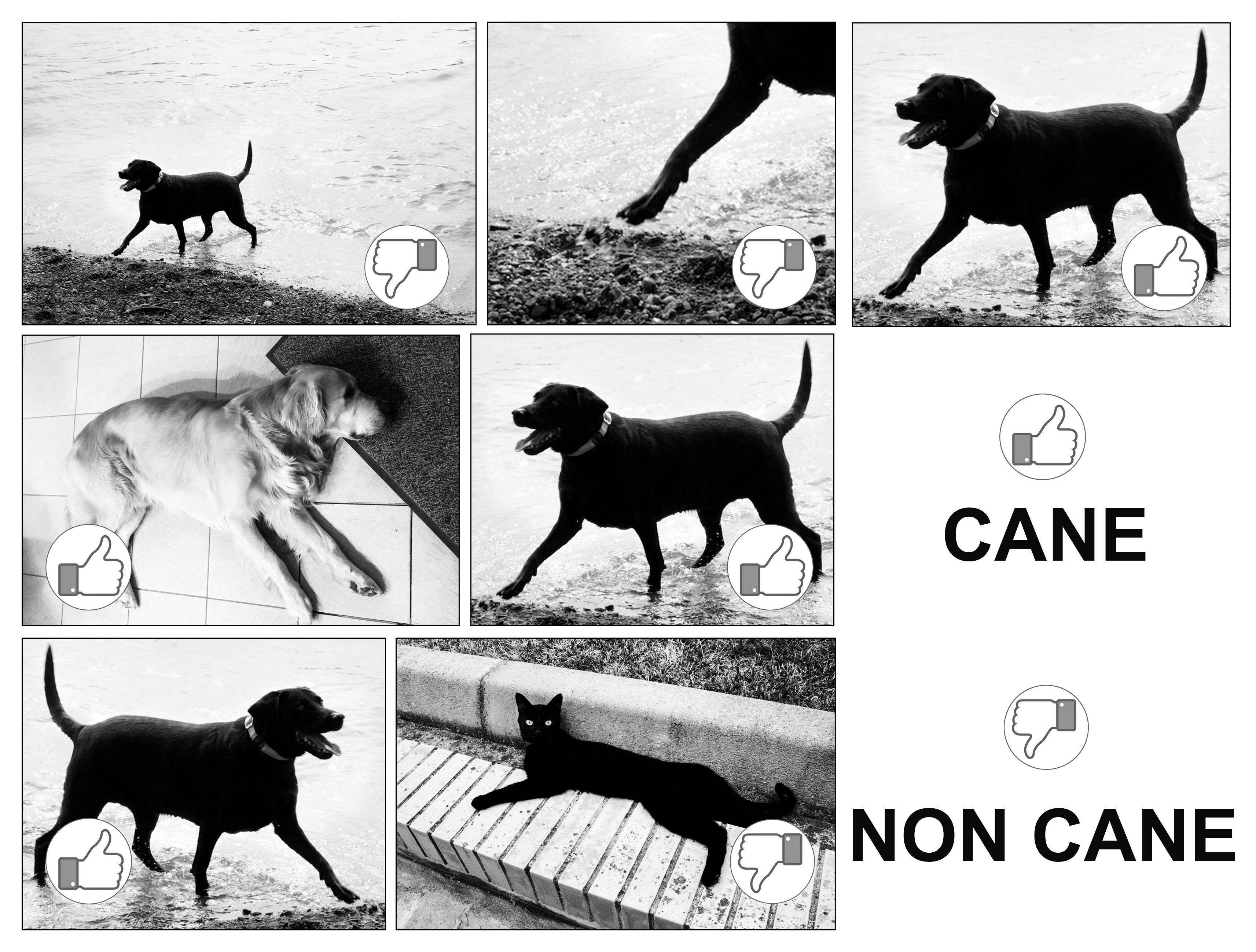 Cane o non cane