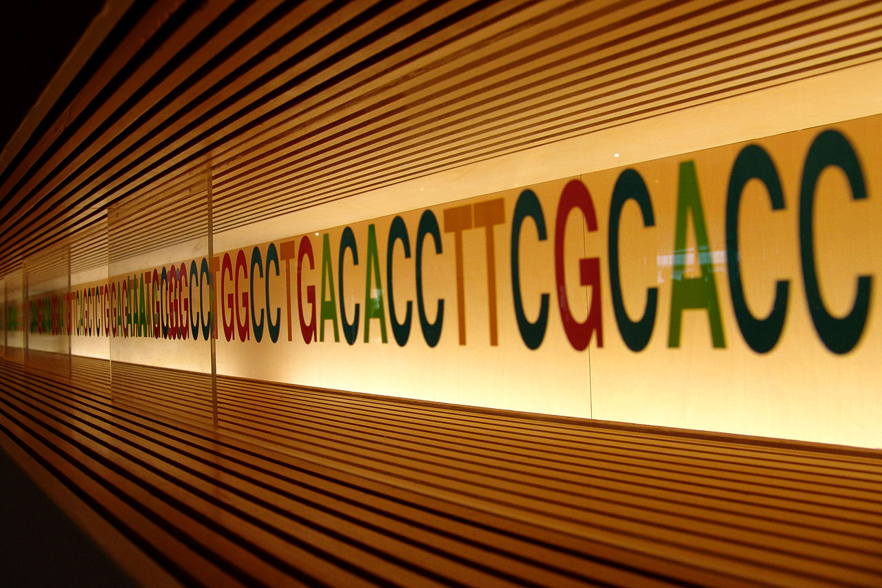 DNA sequence by MIKI Yoshihito CC BY https://commons.wikimedia.org/wiki/File:DNA_sequence.jpg