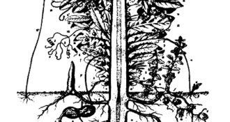 La pianta ideale. Illustrazione di P.J.F. Turpin per La Metamorfosi delle Piante di Goethe cover