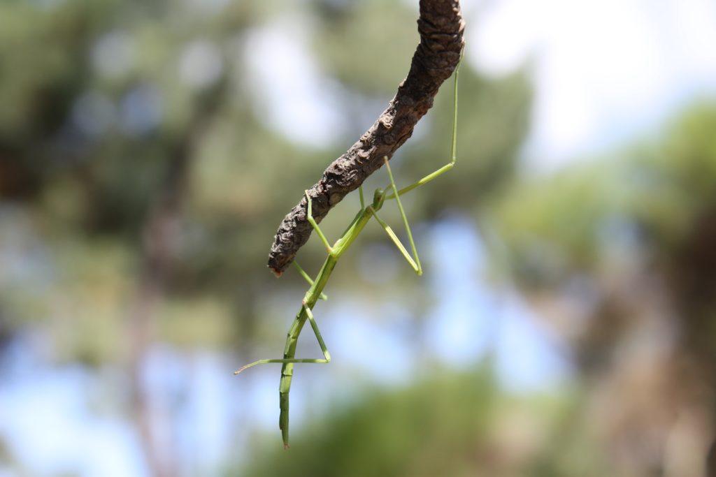 Resilienza insetto stecco