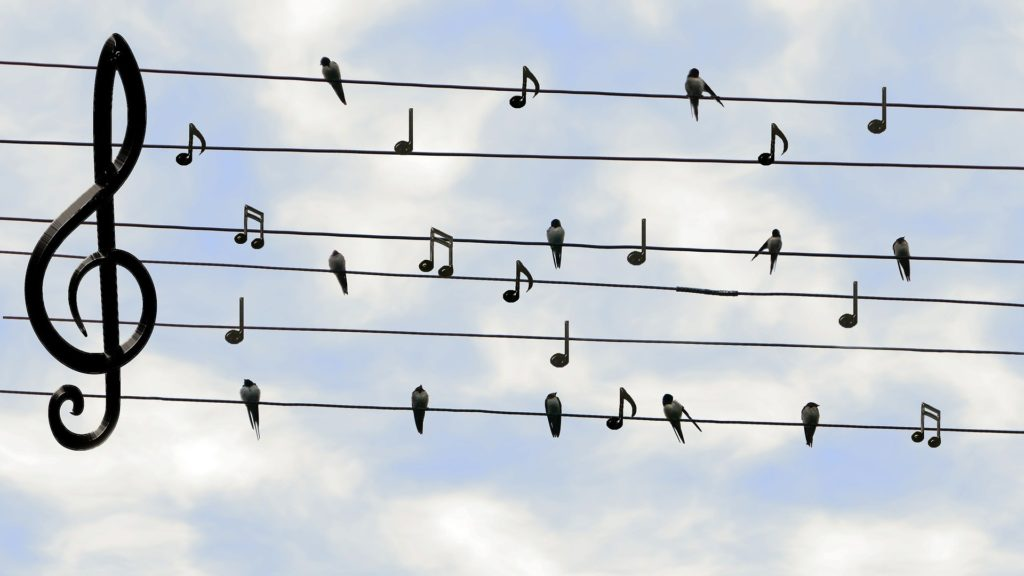 musica uccelli