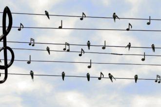 musica-cover