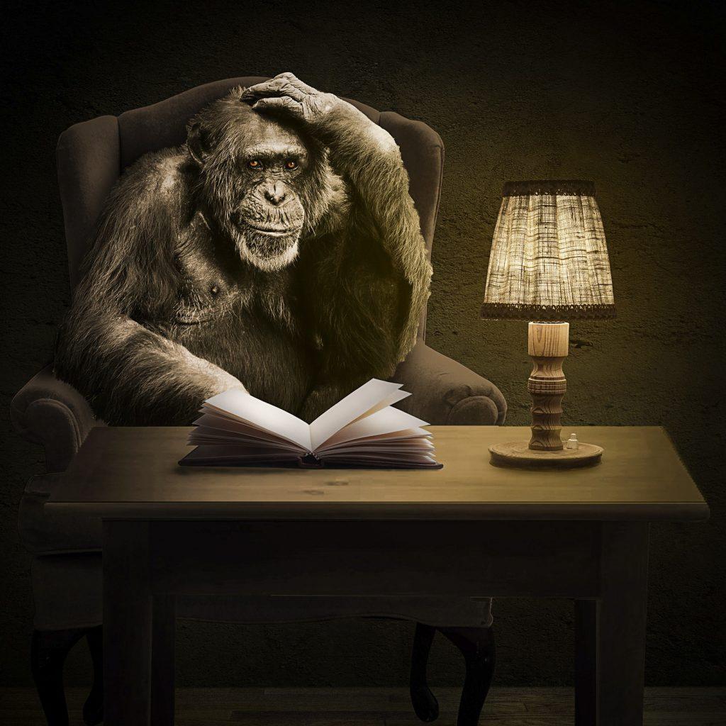 fondamenti scimmia