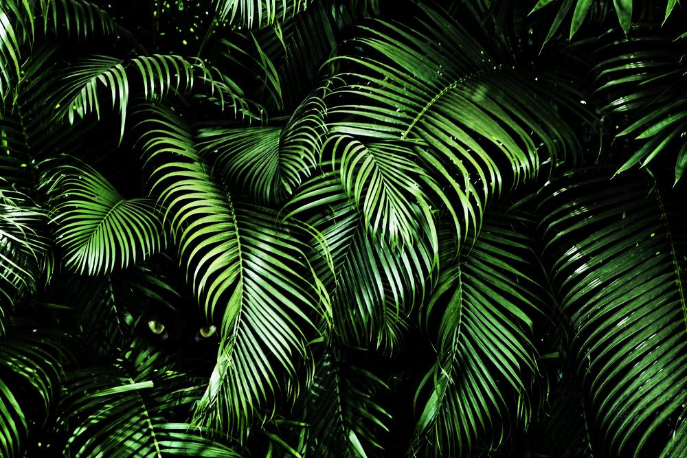 james jungle